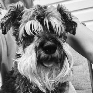 cute dog, senior dog